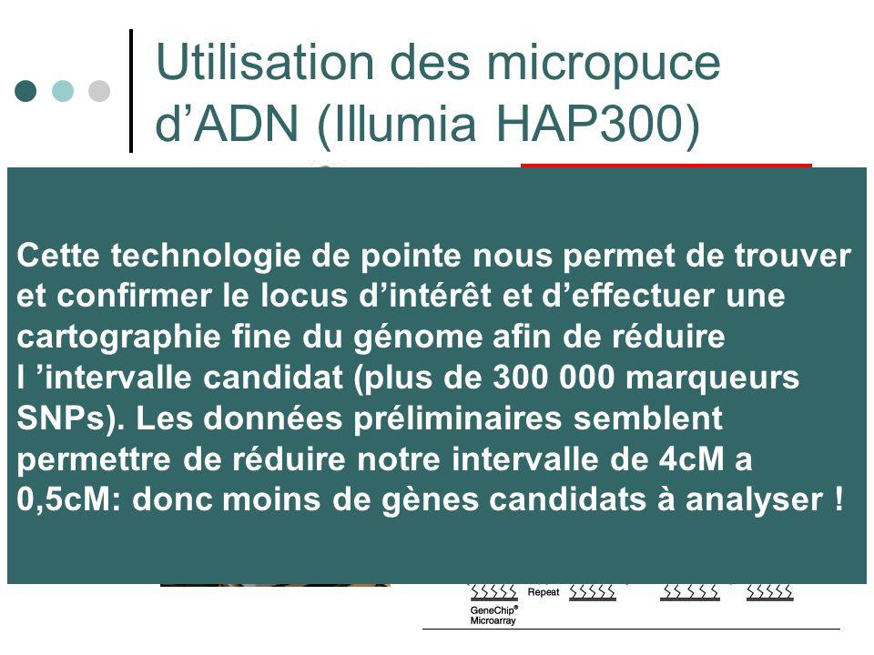 Utilisation des micropuce dADN (Illumia HAP300) ETAPE 1 ADN fixe les billes de la micro-puce ETAPE 2 Lecture & Analyses Cette technologie de pointe nous permet de trouver et confirmer le locus dintérêt et deffectuer une cartographie fine du génome afin de réduire l intervalle candidat (plus de 300 000 marqueurs SNPs).