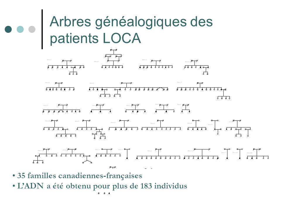 Arbres généalogiques des patients LOCA 35 familles canadiennes-françaises LADN a été obtenu pour plus de 183 individus