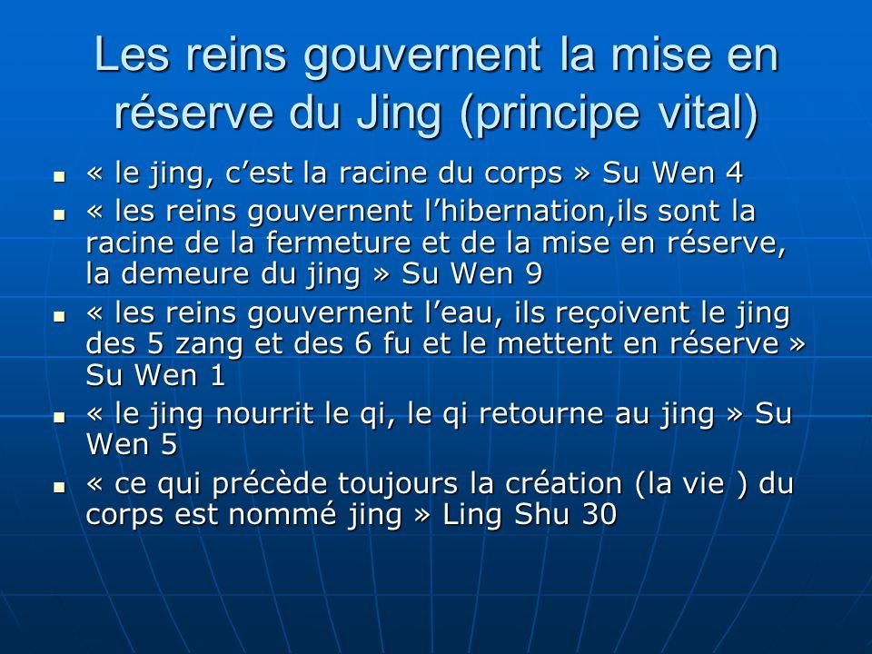 Les reins gouvernent la mise en réserve du Jing (principe vital) « le jing, cest la racine du corps » Su Wen 4 « le jing, cest la racine du corps » Su Wen 4 « les reins gouvernent lhibernation,ils sont la racine de la fermeture et de la mise en réserve, la demeure du jing » Su Wen 9 « les reins gouvernent lhibernation,ils sont la racine de la fermeture et de la mise en réserve, la demeure du jing » Su Wen 9 « les reins gouvernent leau, ils reçoivent le jing des 5 zang et des 6 fu et le mettent en réserve » Su Wen 1 « les reins gouvernent leau, ils reçoivent le jing des 5 zang et des 6 fu et le mettent en réserve » Su Wen 1 « le jing nourrit le qi, le qi retourne au jing » Su Wen 5 « le jing nourrit le qi, le qi retourne au jing » Su Wen 5 « ce qui précède toujours la création (la vie ) du corps est nommé jing » Ling Shu 30 « ce qui précède toujours la création (la vie ) du corps est nommé jing » Ling Shu 30