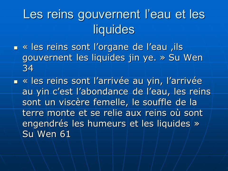 Les reins gouvernent leau et les liquides « les reins sont lorgane de leau,ils gouvernent les liquides jin ye.