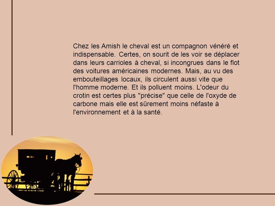 Chez les Amish le cheval est un compagnon vénéré et indispensable. Certes, on sourit de les voir se déplacer dans leurs carrioles à cheval, si incongr