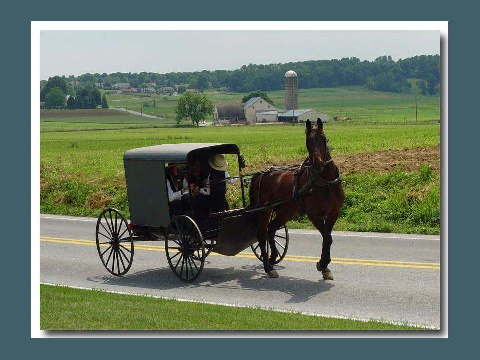 Les Amish sont regroupés en petites communautés.