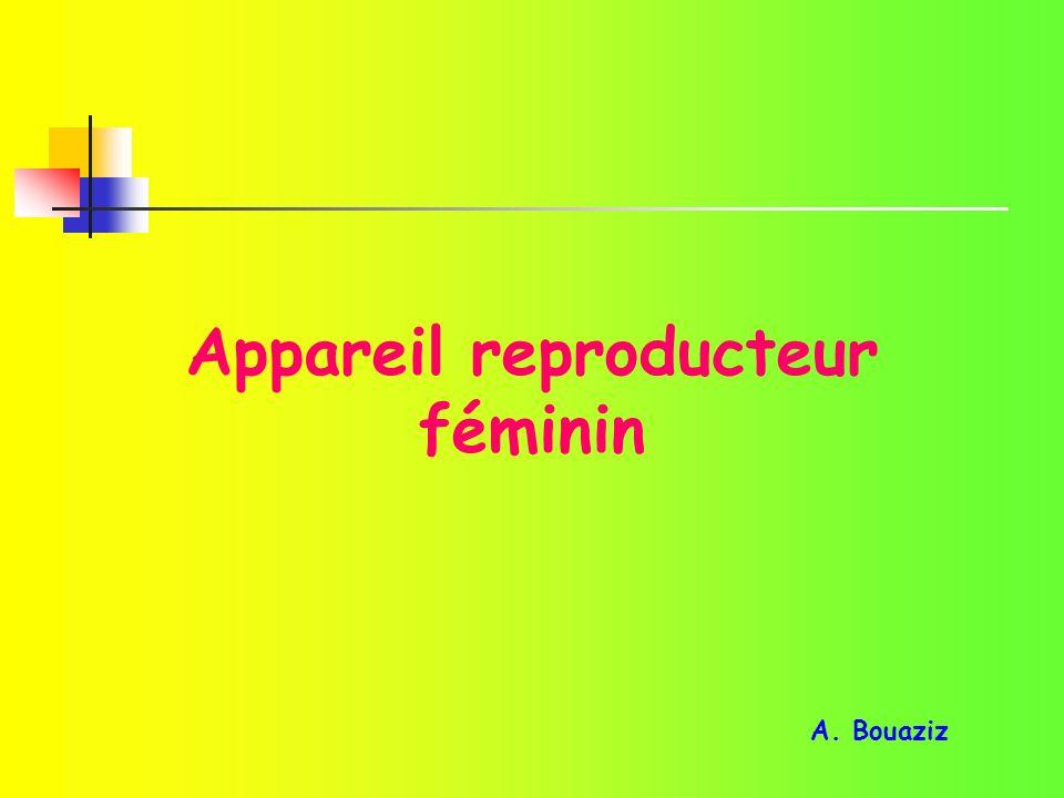 Appareil reproducteur féminin A. Bouaziz
