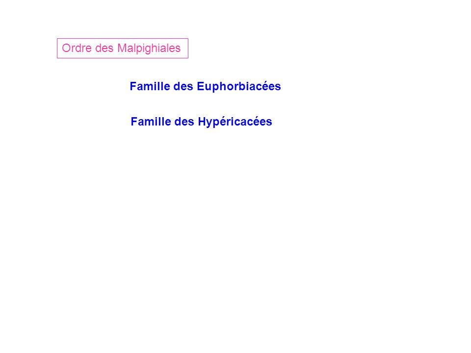 Ordre des Malpighiales Famille des Euphorbiacées Famille des Hypéricacées