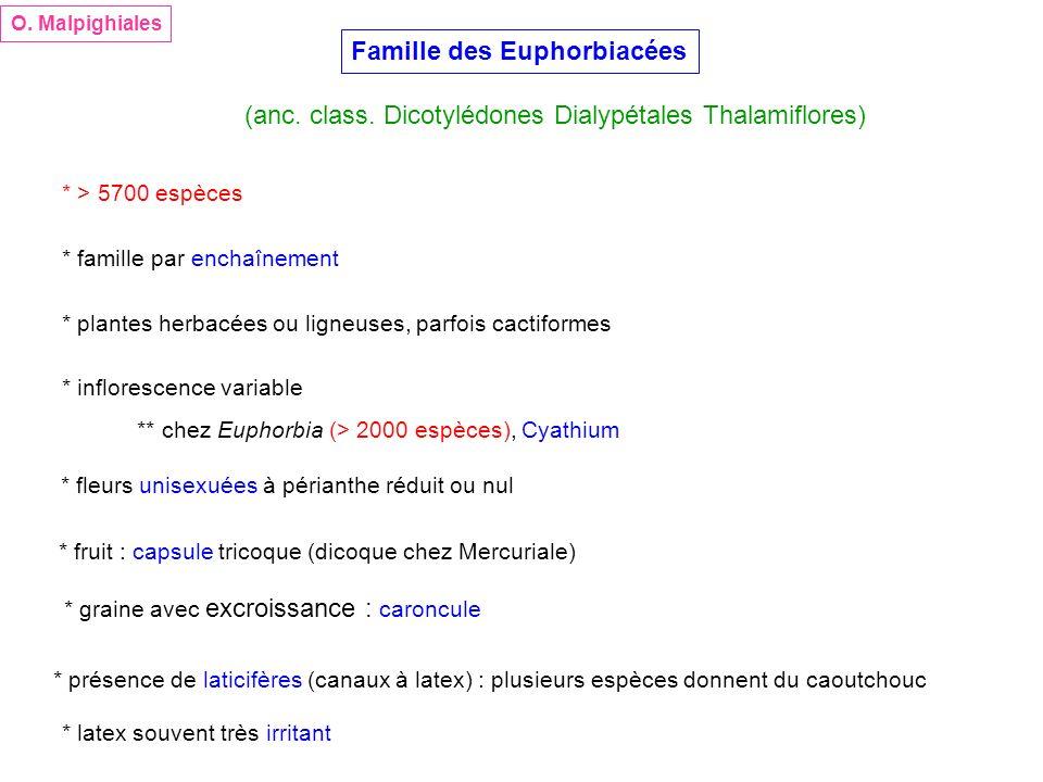 Famille des Euphorbiacées (anc. class. Dicotylédones Dialypétales Thalamiflores) O. Malpighiales * > 5700 espèces * famille par enchaînement * plantes