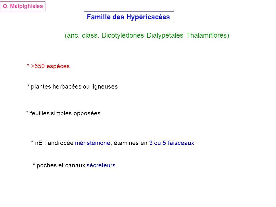 O. Malpighiales Famille des Hypéricacées (anc. class. Dicotylédones Dialypétales Thalamiflores) * >550 espèces * plantes herbacées ou ligneuses * feui
