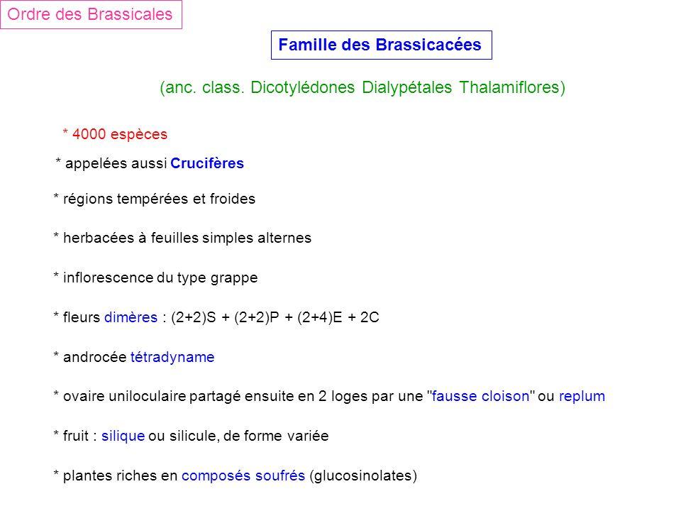 Famille des Brassicacées (anc. class. Dicotylédones Dialypétales Thalamiflores) Ordre des Brassicales * 4000 espèces * régions tempérées et froides *