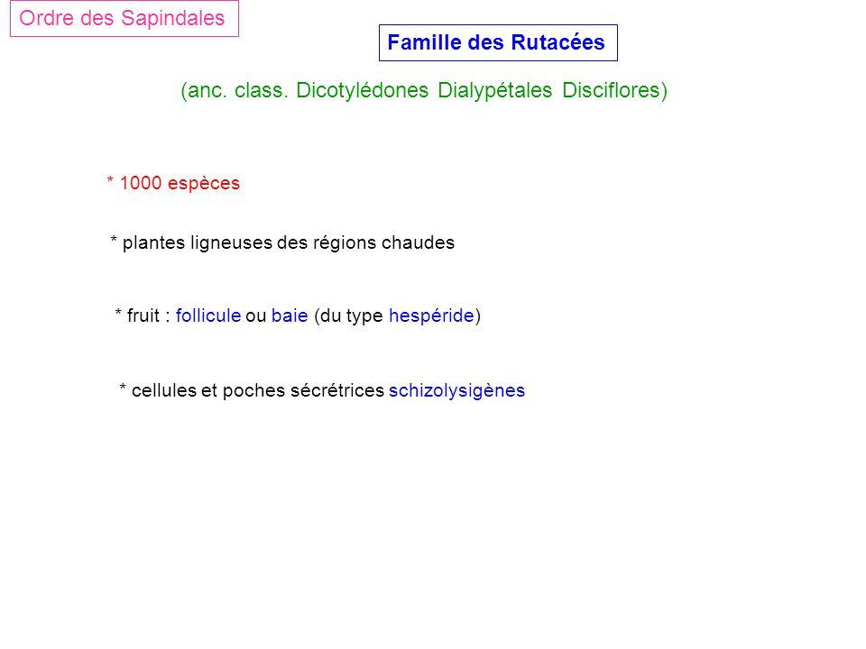 Famille des Rutacées (anc. class. Dicotylédones Dialypétales Disciflores) Ordre des Sapindales * 1000 espèces * plantes ligneuses des régions chaudes