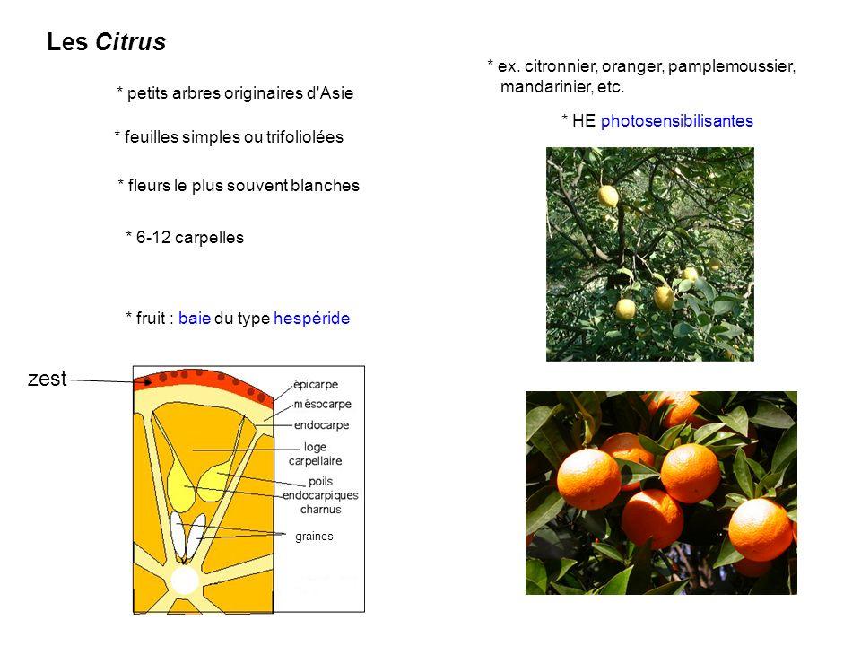 Les Citrus * petits arbres originaires d'Asie * feuilles simples ou trifoliolées * fleurs le plus souvent blanches * 6-12 carpelles * fruit : baie du