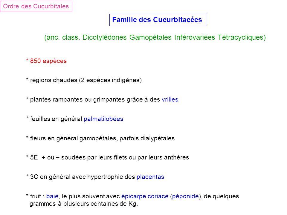 Famille des Cucurbitacées (anc. class. Dicotylédones Gamopétales Inférovariées Tétracycliques) Ordre des Cucurbitales * 850 espèces * régions chaudes