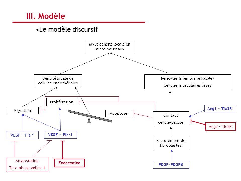 MVD: densité locale en micro-vaisseaux Densité locale de cellules endothéliales Pericytes (membrane basale) Cellules musculaires lisses Migration Endo