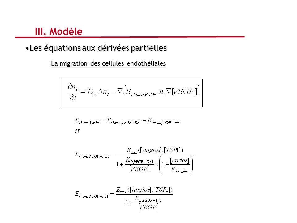 Les équations aux dérivées partiellesLes équations aux dérivées partielles La migration des cellules endothéliales III. Modèle