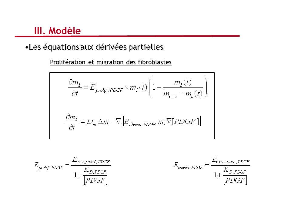 Prolifération et migration des fibroblastes III. Modèle Les équations aux dérivées partiellesLes équations aux dérivées partielles