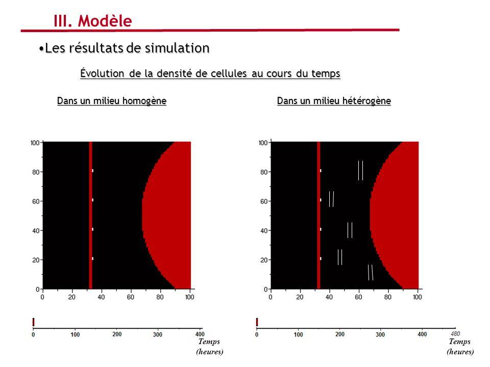 Les résultats de simulationLes résultats de simulation Évolution de la densité de cellules au cours du temps Dans un milieu hétérogène Dans un milieu