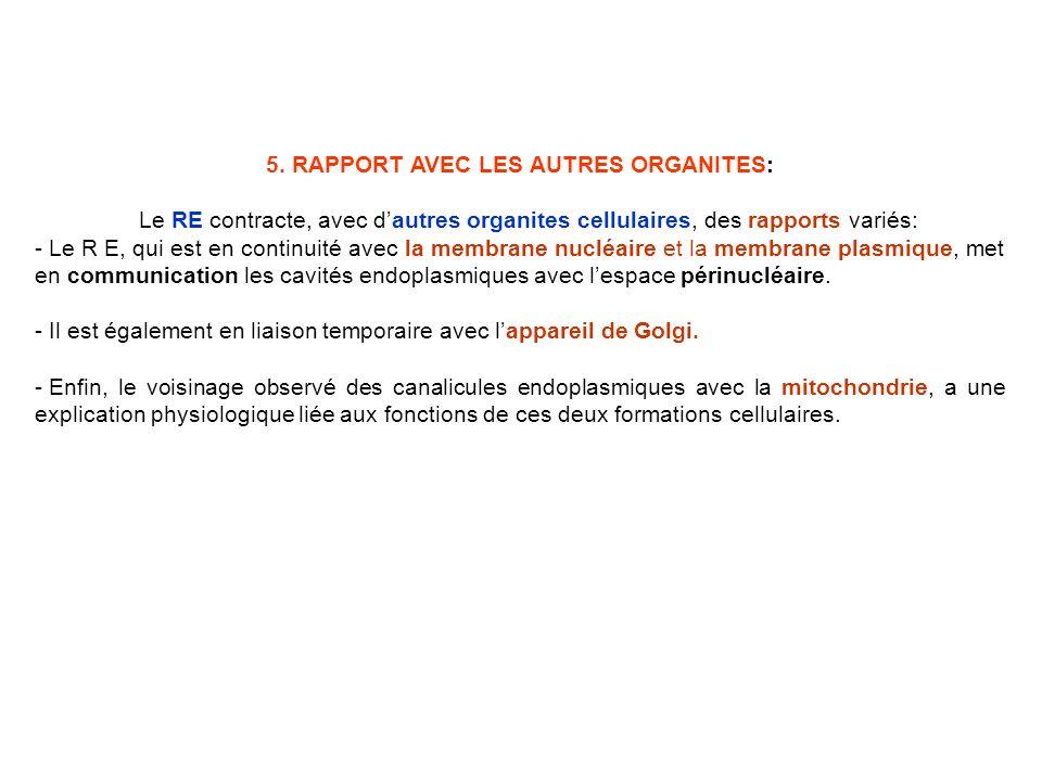 5. RAPPORT AVEC LES AUTRES ORGANITES: Le RE contracte, avec dautres organites cellulaires, des rapports variés: - Le R E, qui est en continuité avec l