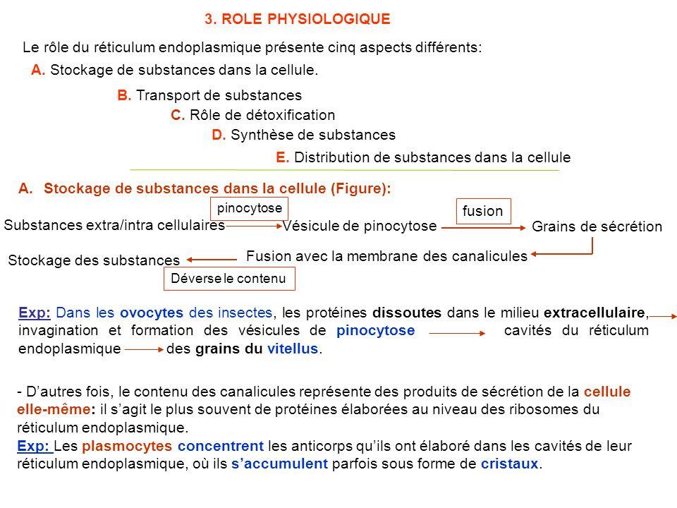3. ROLE PHYSIOLOGIQUE Le rôle du réticulum endoplasmique présente cinq aspects différents: A.Stockage de substances dans la cellule (Figure): Exp: Dan