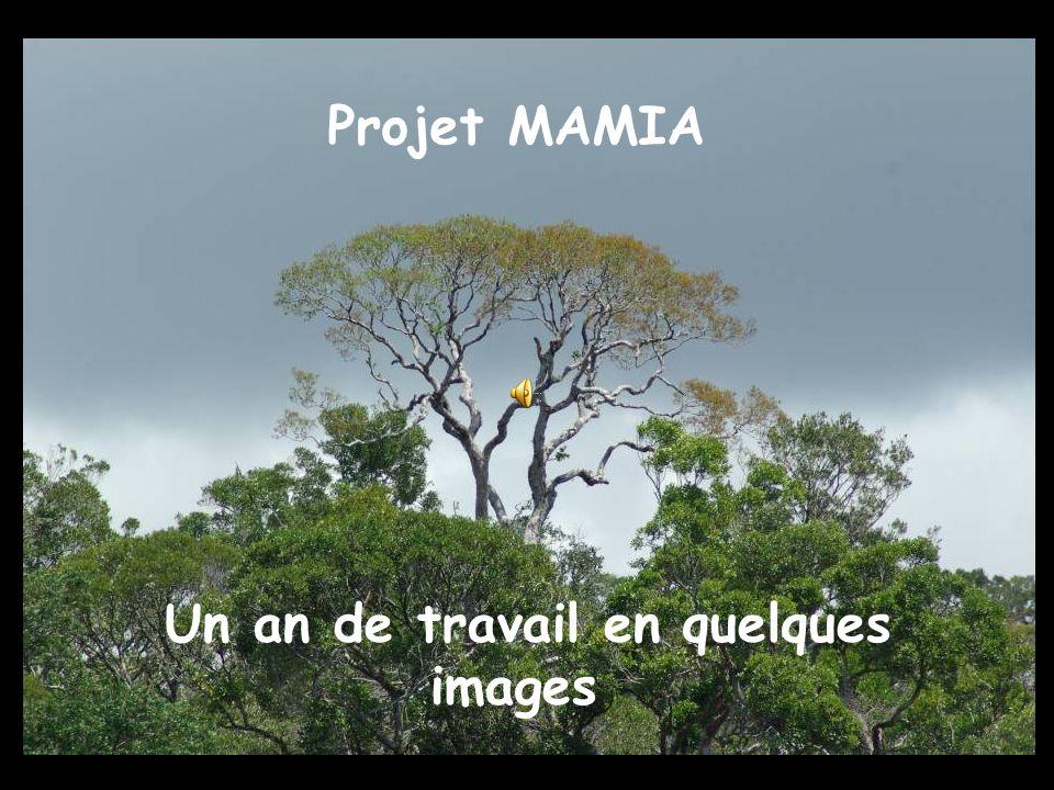 Projet MAMIA Un an de travail en quelques images