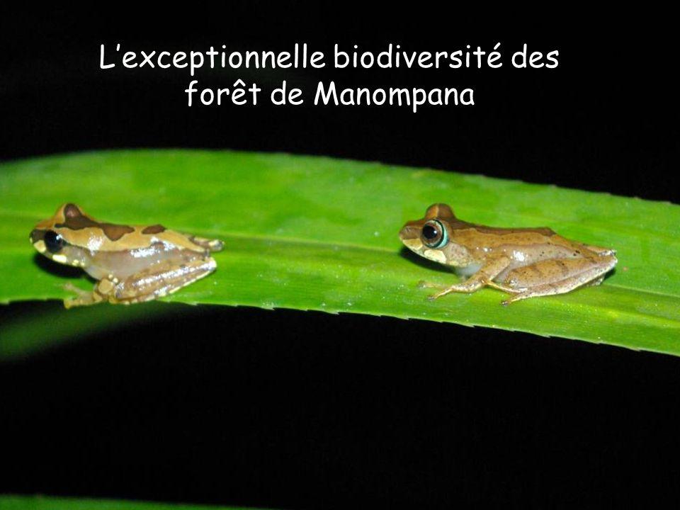 Lexceptionnelle biodiversité des forêt de Manompana