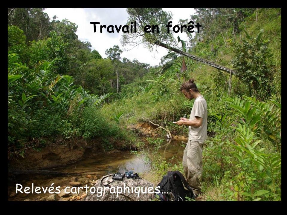 Travail en forêt Relevés cartographiques…