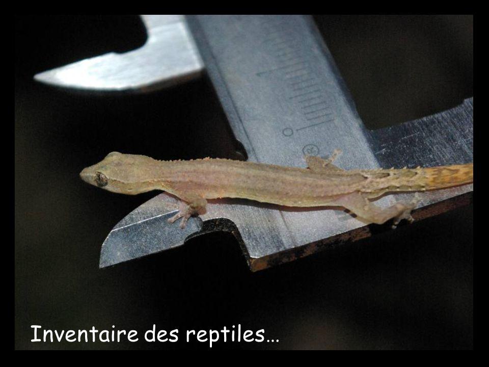 Inventaire des reptiles…