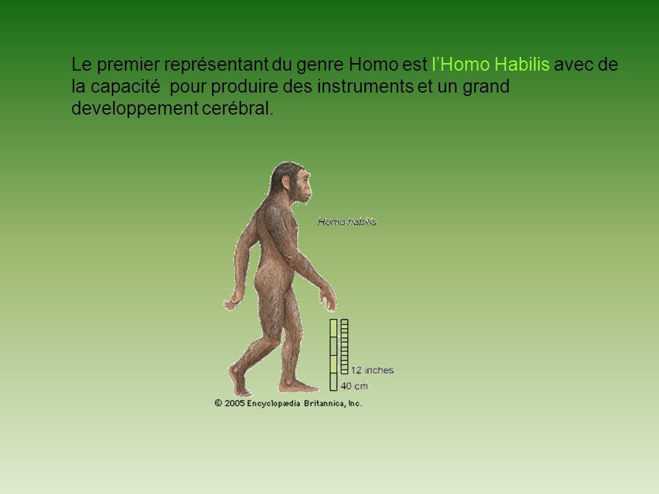 Le premier représentant du genre Homo est lHomo Habilis avec de la capacité pour produire des instruments et un grand developpement cerébral.