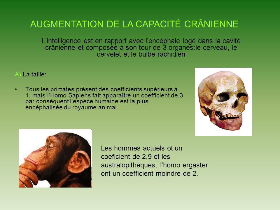 A) La taille: Tous les primates présent des coefficients supérieurs à 1, mais lHomo Sapiens fait apparaître un coefficient de 3 par conséquent lespèce humaine est la plus encéphalisée du royaume animal.