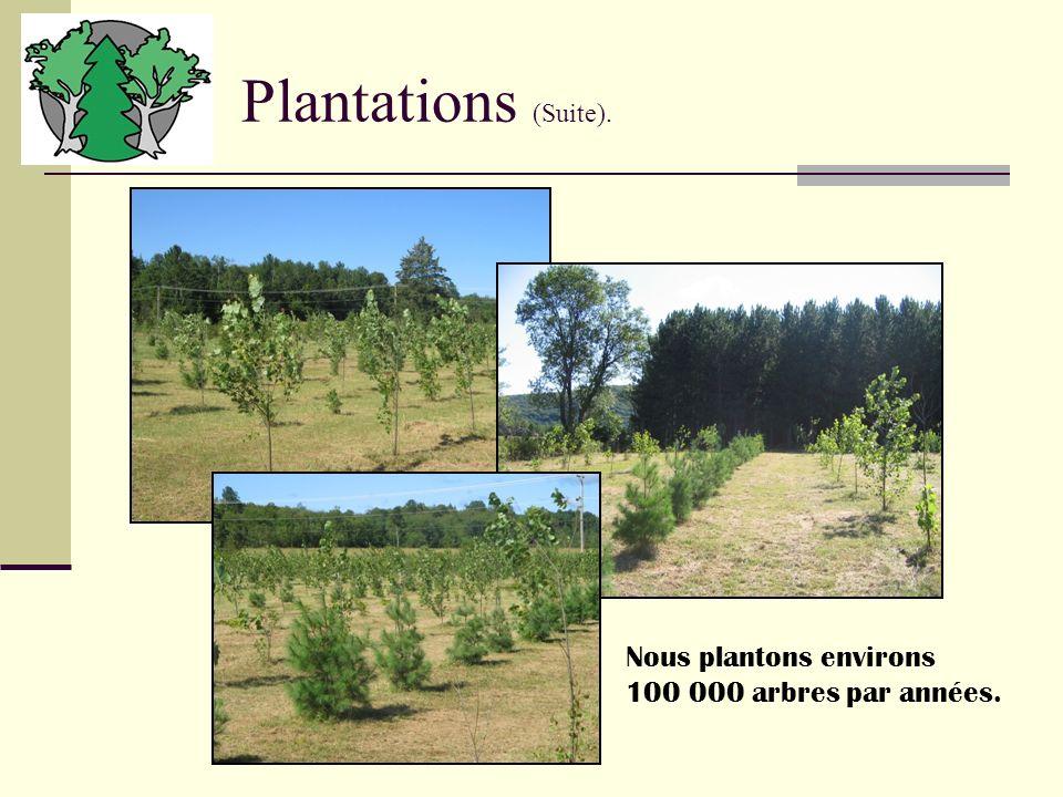 Plantations (Suite). Nous plantons environs 100 000 arbres par années.