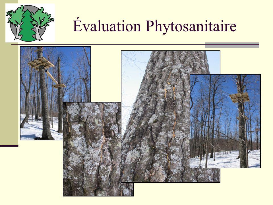 Évaluation Phytosanitaire