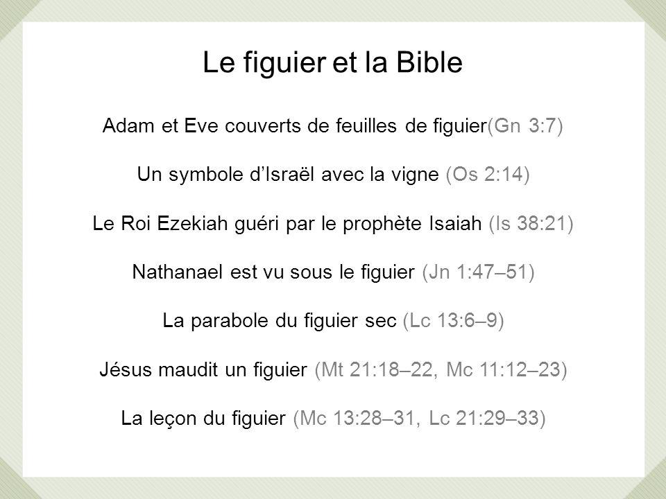Le figuier et la Bible Adam et Eve couverts de feuilles de figuier(Gn 3:7) Un symbole dIsraël avec la vigne (Os 2:14) Le Roi Ezekiah guéri par le prop