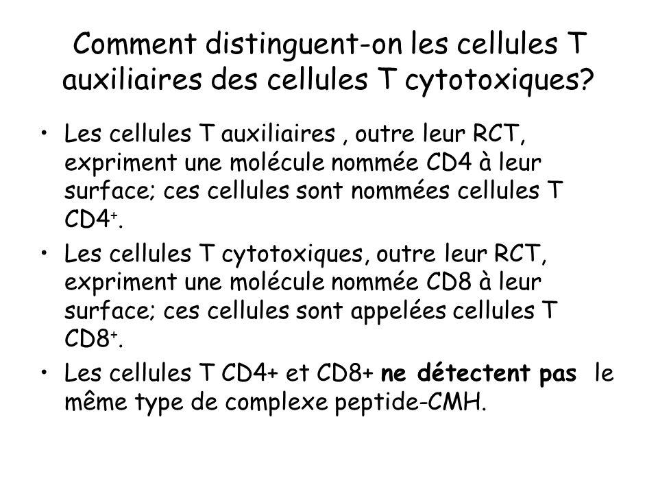 Comment distinguent-on les cellules T auxiliaires des cellules T cytotoxiques? Les cellules T auxiliaires, outre leur RCT, expriment une molécule nomm
