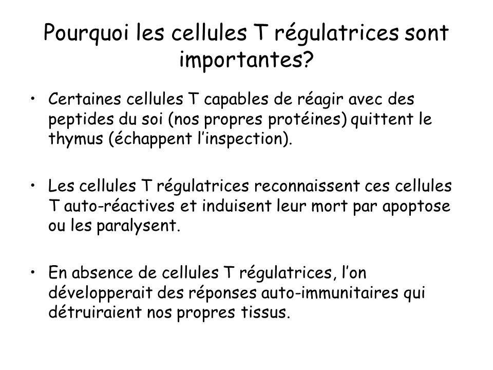 Pourquoi les cellules T régulatrices sont importantes? Certaines cellules T capables de réagir avec des peptides du soi (nos propres protéines) quitte