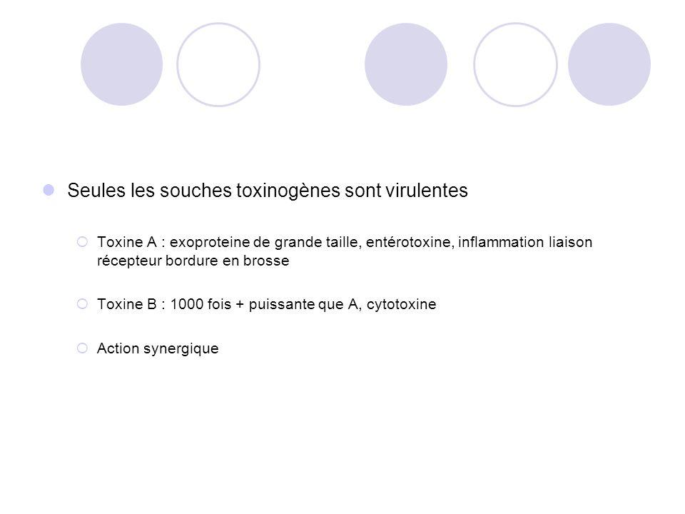 Seules les souches toxinogènes sont virulentes Toxine A : exoproteine de grande taille, entérotoxine, inflammation liaison récepteur bordure en brosse