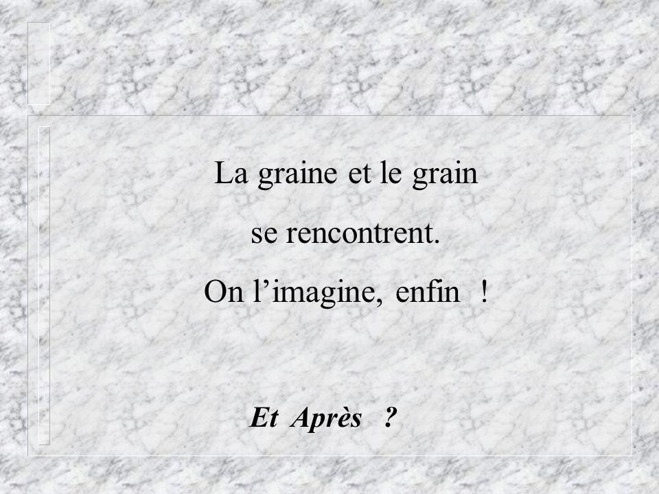 La graine et le grain se rencontrent. On limagine, enfin ! Et Après ?