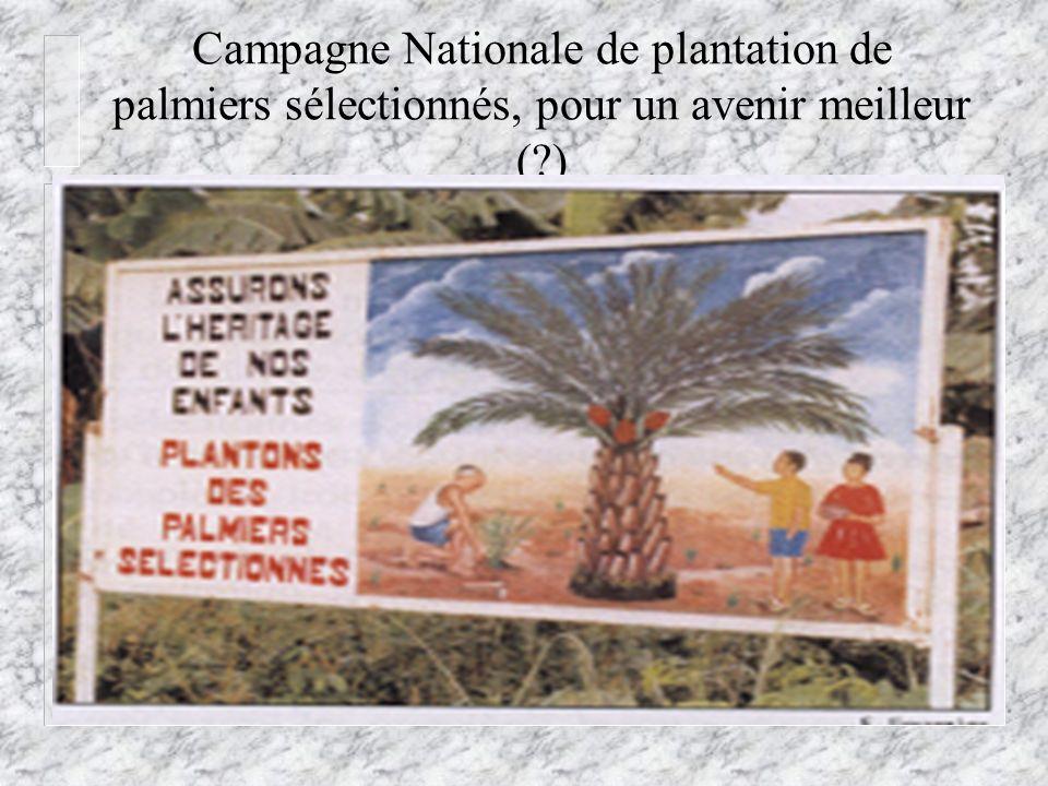 Campagne Nationale de plantation de palmiers sélectionnés, pour un avenir meilleur (?)