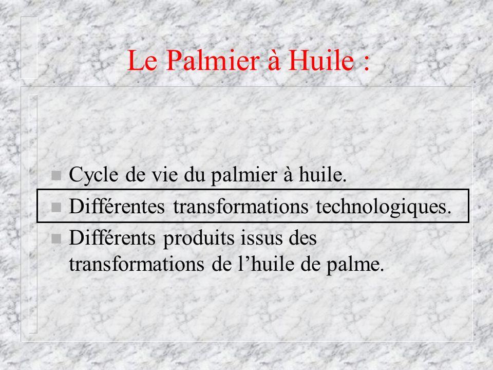 Le Palmier à Huile : n Cycle de vie du palmier à huile. n Différentes transformations technologiques. n Différents produits issus des transformations