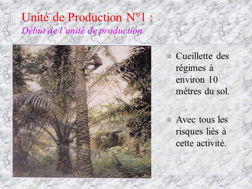 Unité de Production N°1 : Début de lunité de production n Cueillette des régimes à environ 10 mètres du sol. n Avec tous les risques liés à cette acti