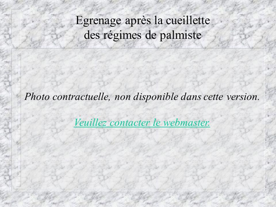 Egrenage après la cueillette des régimes de palmiste Photo contractuelle, non disponible dans cette version. Veuillez contacter le webmaster.