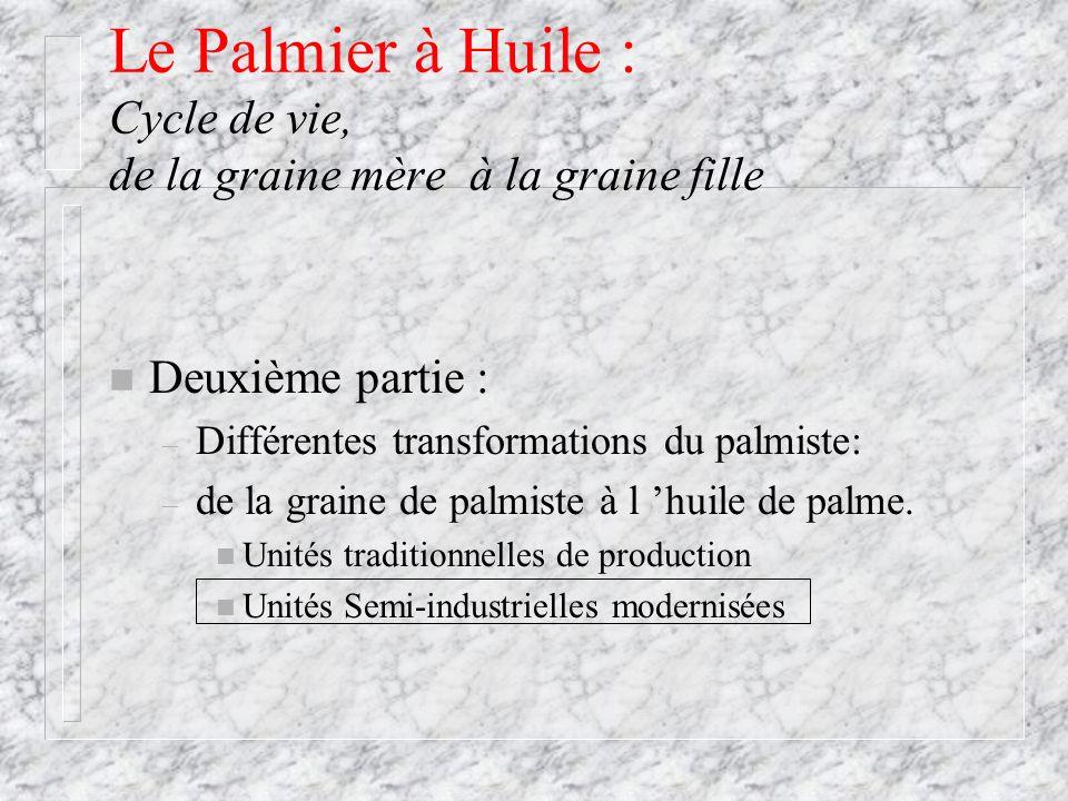Le Palmier à Huile : Cycle de vie, de la graine mère à la graine fille n Deuxième partie : – Différentes transformations du palmiste: – de la graine d