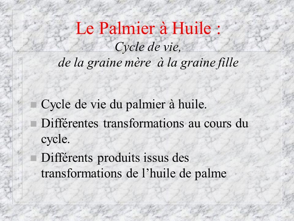Le Palmier à Huile : Cycle de vie, de la graine mère à la graine fille n Cycle de vie du palmier à huile. n Différentes transformations au cours du cy