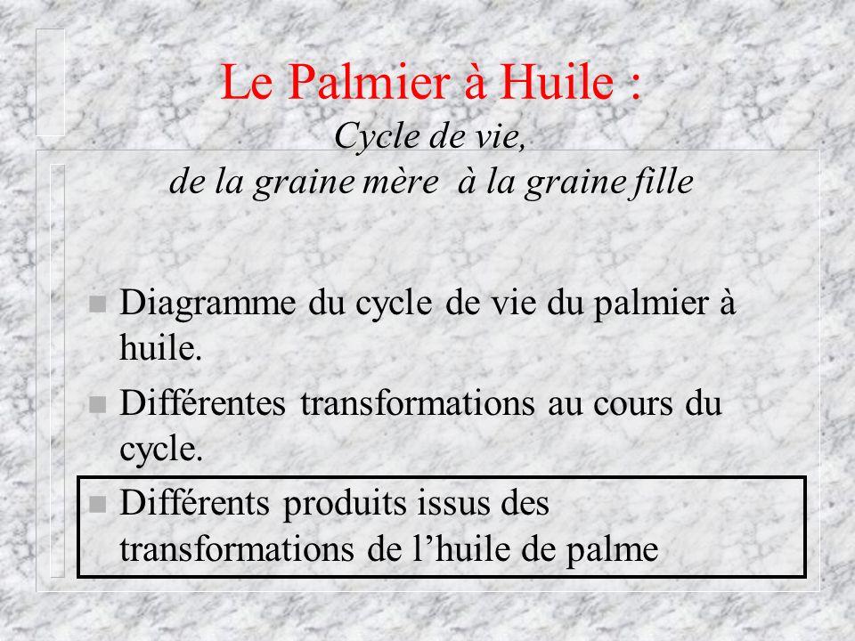 Le Palmier à Huile : Cycle de vie, de la graine mère à la graine fille n Diagramme du cycle de vie du palmier à huile. n Différentes transformations a