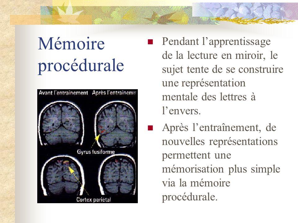 Mémoire procédurale Pendant lapprentissage de la lecture en miroir, le sujet tente de se construire une représentation mentale des lettres à lenvers.