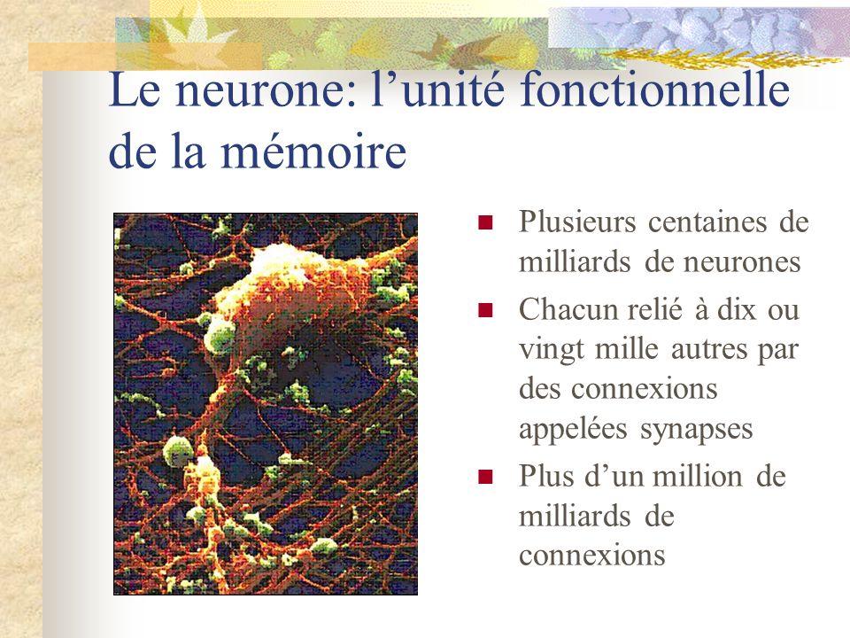 Le neurone: lunité fonctionnelle de la mémoire Plusieurs centaines de milliards de neurones Chacun relié à dix ou vingt mille autres par des connexion