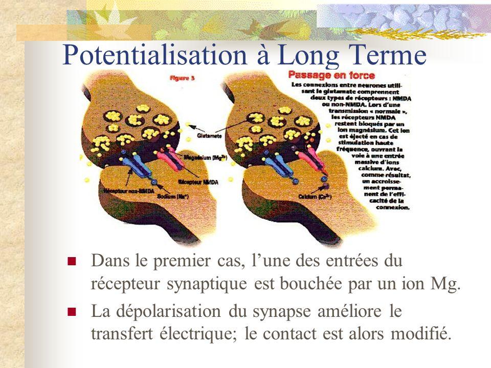 Potentialisation à Long Terme Dans le premier cas, lune des entrées du récepteur synaptique est bouchée par un ion Mg. La dépolarisation du synapse am