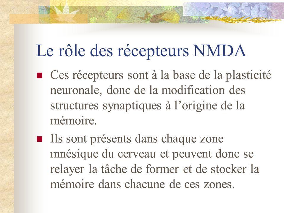 Le rôle des récepteurs NMDA Ces récepteurs sont à la base de la plasticité neuronale, donc de la modification des structures synaptiques à lorigine de