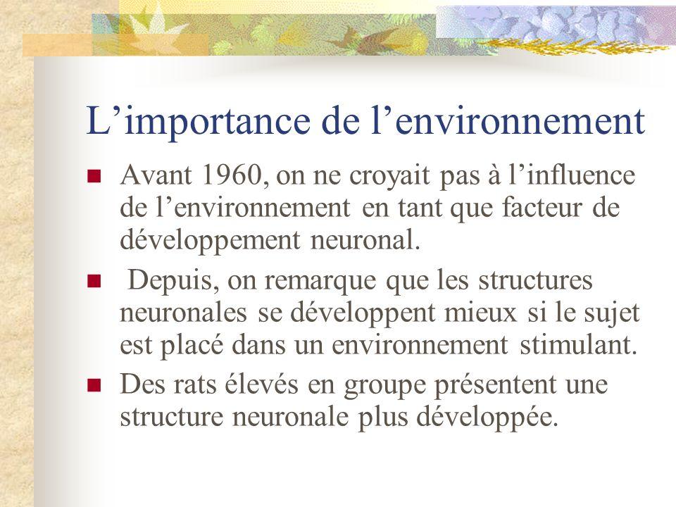 Limportance de lenvironnement Avant 1960, on ne croyait pas à linfluence de lenvironnement en tant que facteur de développement neuronal. Depuis, on r
