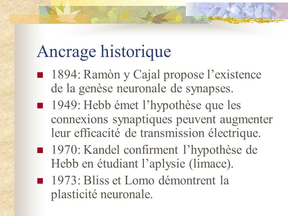 Ancrage historique 1894: Ramòn y Cajal propose lexistence de la genèse neuronale de synapses. 1949: Hebb émet lhypothèse que les connexions synaptique