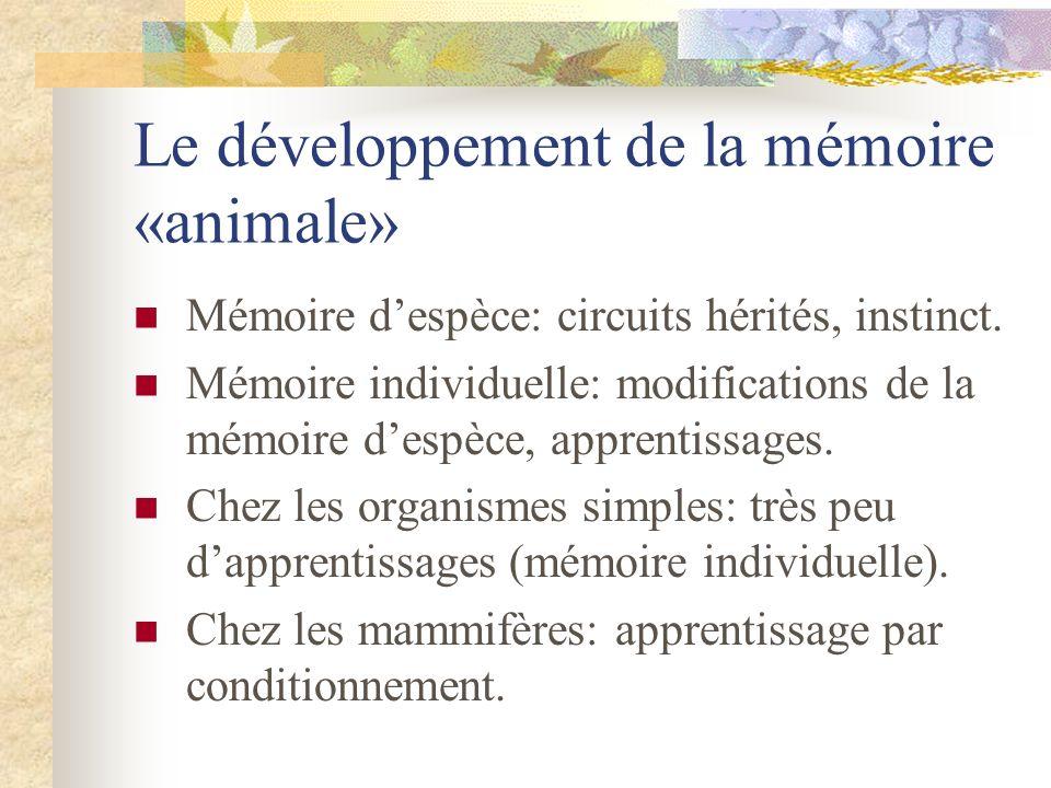 Le développement de la mémoire «animale» Mémoire despèce: circuits hérités, instinct. Mémoire individuelle: modifications de la mémoire despèce, appre
