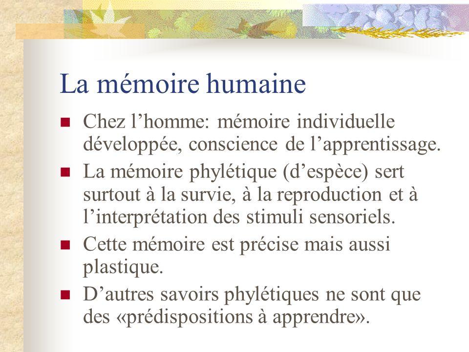 La mémoire humaine Chez lhomme: mémoire individuelle développée, conscience de lapprentissage. La mémoire phylétique (despèce) sert surtout à la survi