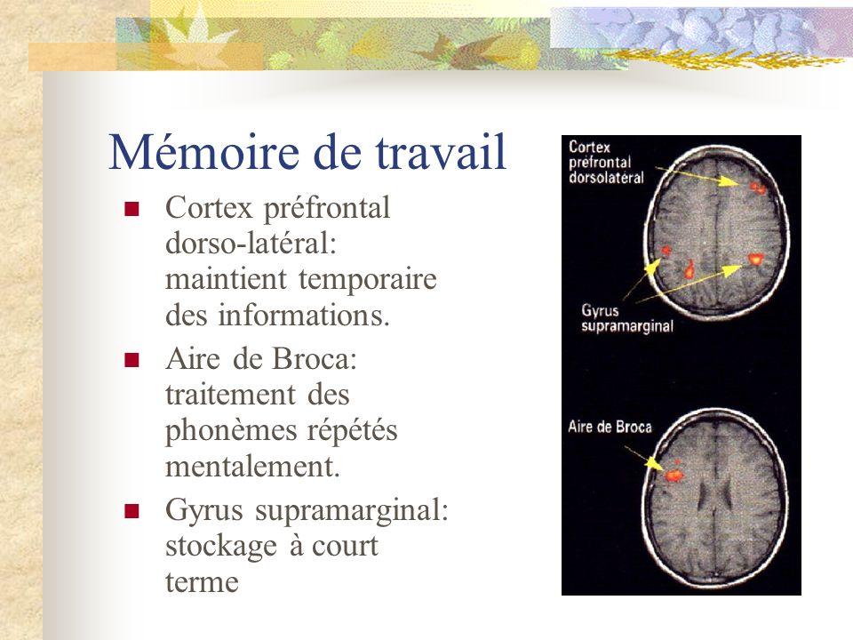 Mémoire de travail Cortex préfrontal dorso-latéral: maintient temporaire des informations. Aire de Broca: traitement des phonèmes répétés mentalement.