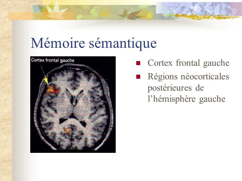 Mémoire sémantique Cortex frontal gauche Régions néocorticales postérieures de lhémisphère gauche